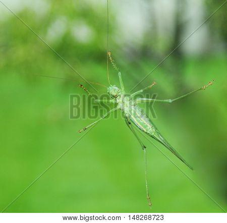 Full span, grasshopper on a windowpane, soft focus