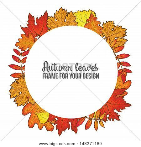 Round frame with fall leaves, sketch style illustration isolated on white background. Red, yellow and orange maple, aspen, oak and rowan autumn leaves as a round frame