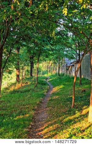 A dirt path through the trees in the countryside