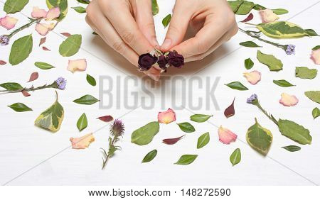 Hands female with roses on a background of petals flowers and leaves..Inspirational image.Type flat top view.floristry florist desktop workstation creative designer