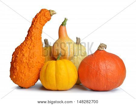 Colorful pumpkins isolated on a white background
