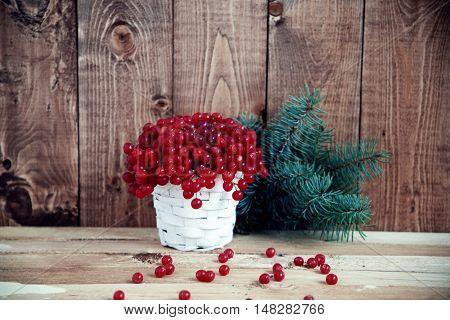 Viburnum Twigs In Pots