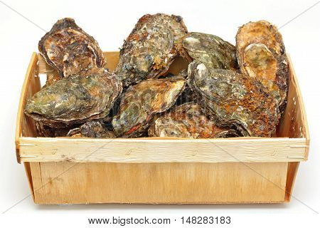 Fresh Rock Oysters Seafood Clams in Crate