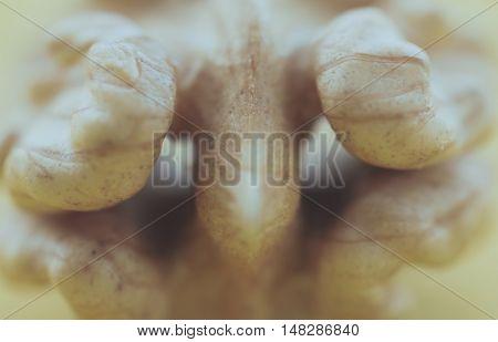 Close up of kernel big bright walnut