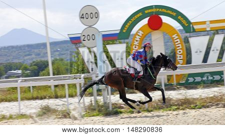 Pyatigorsk, Russia - September 18,2016: Finish horse race for the prize of the Sravnenia, Russia's largest hippodrome in Pyatigorsk,Caucasus,Russia on September 182016.