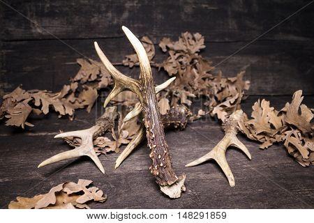 Deer Antlers On Wooden Background