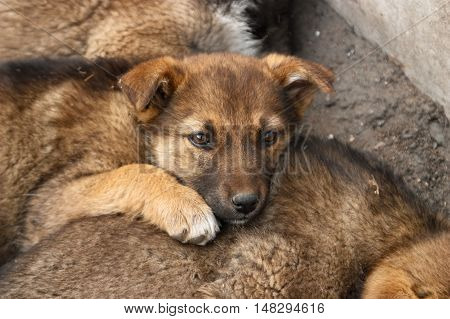 Sad homeless puppy lies on another puppy. Soft focus