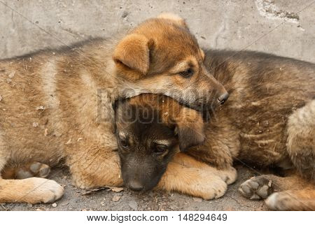 Two sad homeless puppy lying in the arms to keep warm on the cold ground. Soft focus