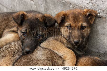 Two homeless puppy lying on the ground close to each other. Soft focus