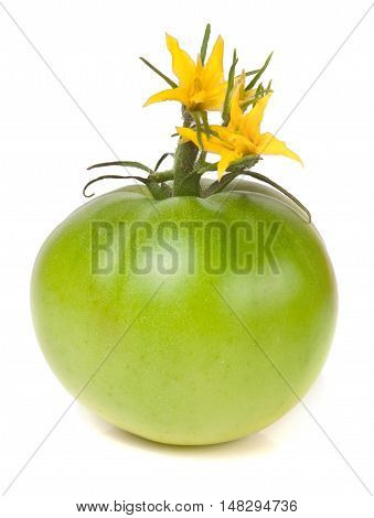 one green unripe tomato with a flower isolated on white background.