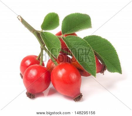 branch rosehip with leaves isolated on white background.