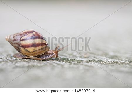 Closeup a snail moving on street floor in the outdoor textured background