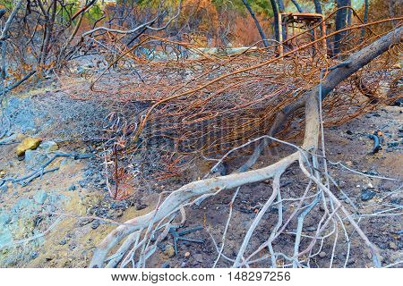 Charcoaled landscape including burnt trees and plants with a burnt bed foundation taken at a former property after a wildfire