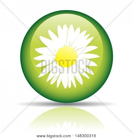 Glossy camomile in green circle isolated on white