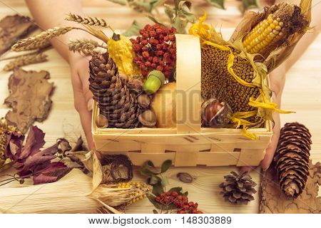 Basket with fall ingredients held in womans hands - Autumn products such as corn sunflower apple pumpkins in a wooden basket decorated with other forestry fall elements.