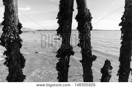 Wooden Beach Defences Covered In Seaweed