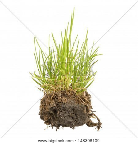 green grass with earth crosscut isolated on white background