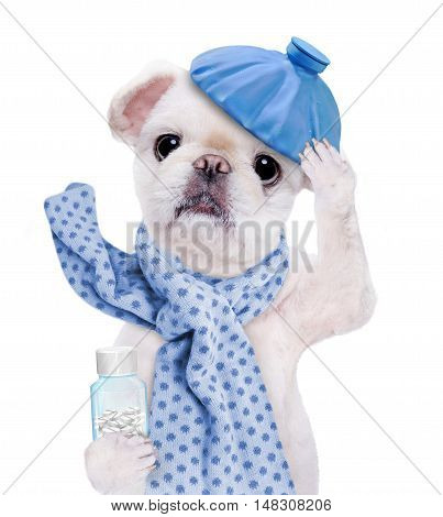 Sick dog with  water bottle on head isolated on white background.