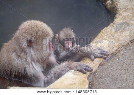 Mother and baby monkeys in hot springs. Jigokudani Monkey Park. Nagano. Japan.