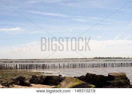 Broken Defences And Wooden Poles On Mersea Island
