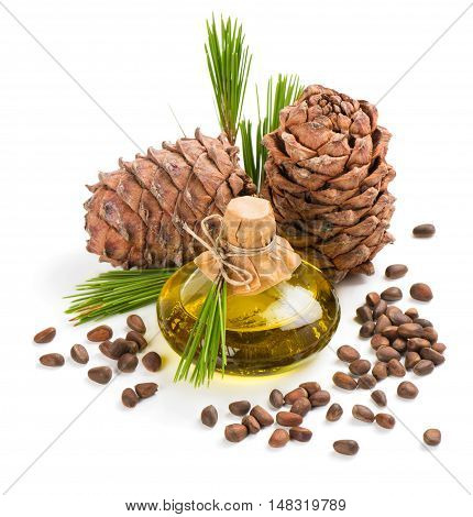 Cedar nuts cones and extra virgin cedar oil in bottle decorated with twigs of cedar tree isolated on white background.