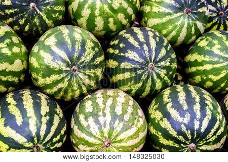 Pile Of Green Skin Huge Watermelons In A Pattern