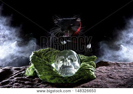 Black cat in a cape with a crystal skull on a black background