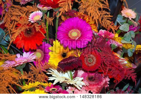 Flowers background with gerberas of different colors