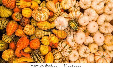 Colorful seasonal autumn pumpkins and squash background.