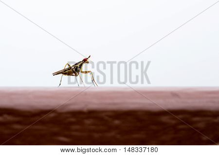 Small Red Eyed Insect