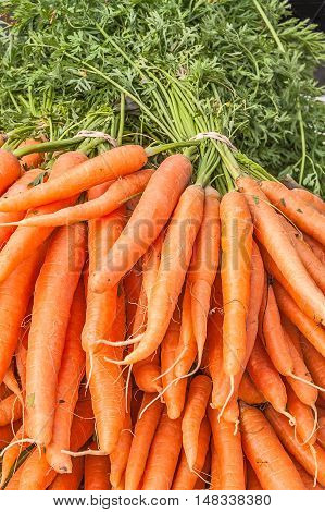 Fresh bunches of carrots on display at a farmer's market