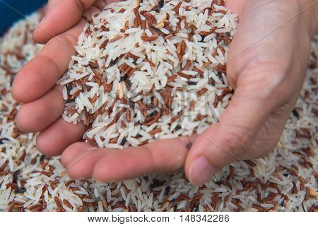 closeup Mixed White and brown rice, colorful rice grain in hand