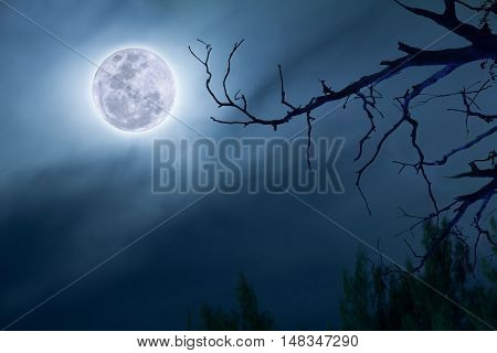 full moon in dark blue sky background a silhouette and dry dead trees.