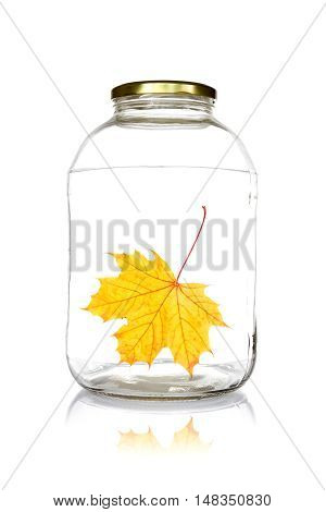 Glass jar with fallen leaf isolated on white background.