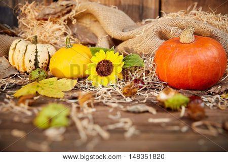 Pumpkin And Sunflower Autumn Still Life