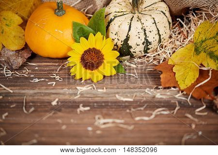 Thanksgiving Background With Pumpkins And Sunflower