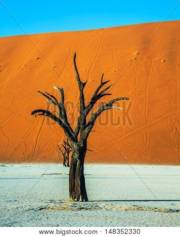 Orange dune. The bottom of dried lake Deadvlei, with dry trees. Ecotourism in Namib-Naukluft National Park, Namibia