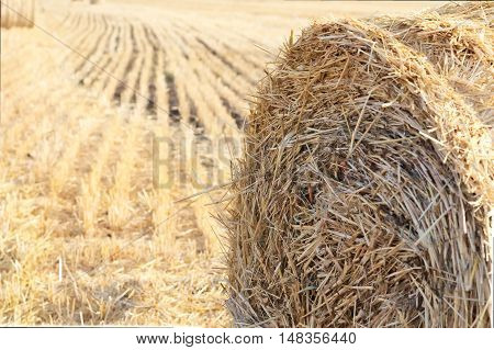Sheaf of hay in the autumn field closeup