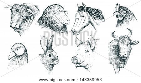Collection of farm animals .Isolated on white background.Vector illustration. Hand drawn style