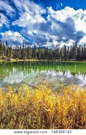 Warm autumn day in Jasper National Park in the Canada. Coniferous forest is reflected in the mirrored water of lake