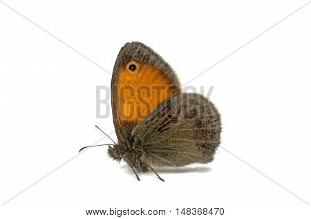 Butterfly insect macro isolated on white background