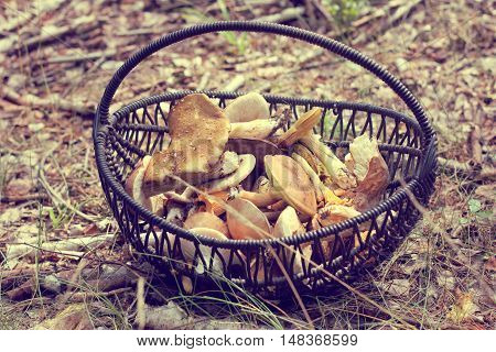 wicker basket with a variety of mushrooms on the background of forest cover / crop delicious gifts of nature