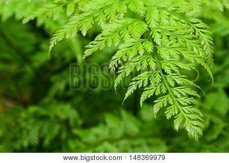 Fern leaf in the garden with area to insert text