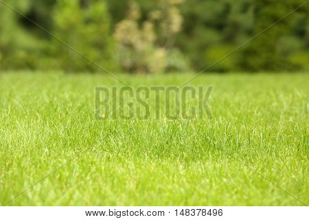 Green lawn on blurred background