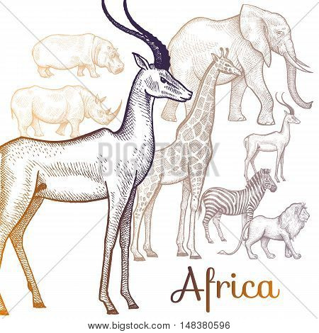 Poster African animals. Vector illustration for book covers brochures text signage visual aid for children. Drawing on white background. Elephant lion giraffe rhino hippo zebra antelope.