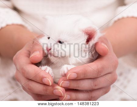Cute fluffy kitten on a woman's hands over white background