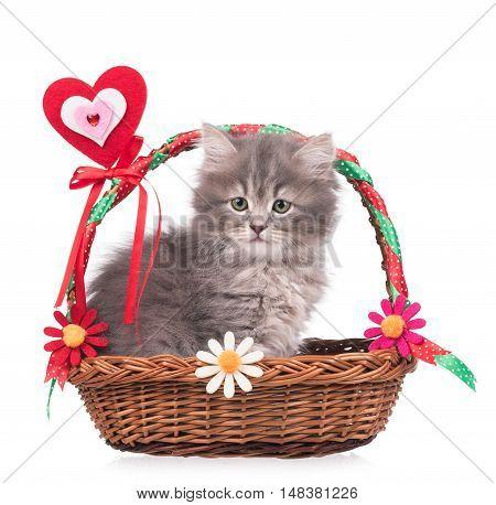 Cute fluffy kitten in the festive wicker basket isolated over white background