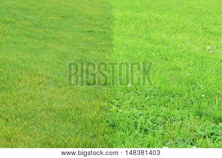 Background of green grass. Green grass texture