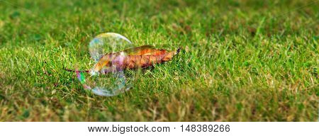 The rainbow bubbles from the bubble blower.Soap bubbles on green natural background.