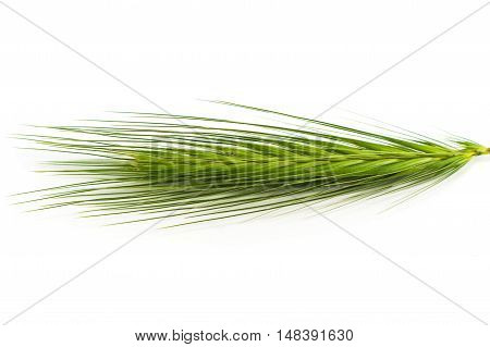 Spikelets isolated on white background close up